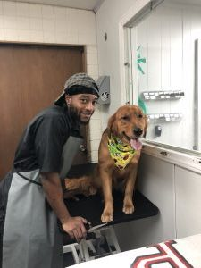 Tevon : Jr Groomer and Bather